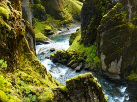 Fjaðrárgljúfur canyon. It's but a blip in the guide book. These blips became our destinations in the south--the places to find refuge from the crowds and the tour buses.